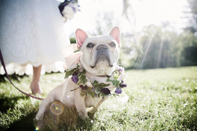 Love Tipis canine wedding