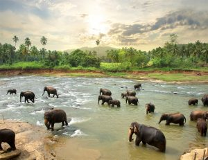 Sri.Lanka.Love.Tipis.Honeymoon.Recommendations