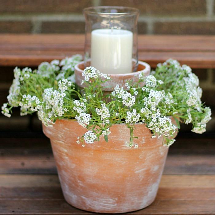living plant table decoration